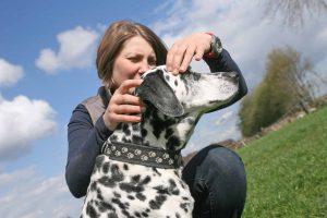 Cranio Sacrale Therapie beim Hund