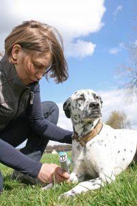 Laserakupunktur beim Pferd und Hund