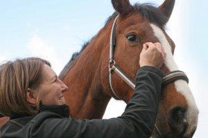 Akupunktur beim Pferd