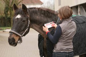 Magnetfeldtherapie beim Pferd