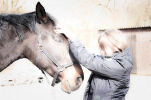 Cranio Sacrale Therapie beim Pferd